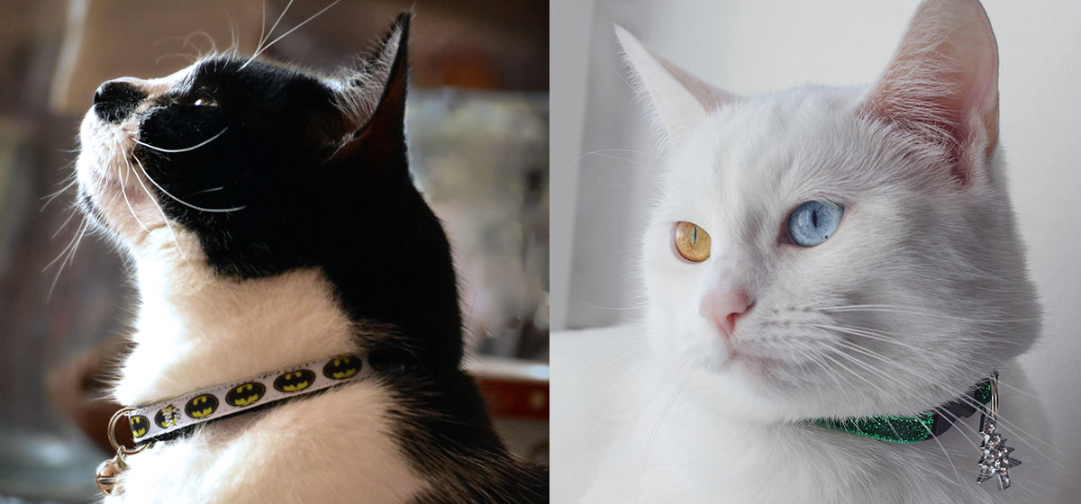 Novelty collars from Cool Cat Collars