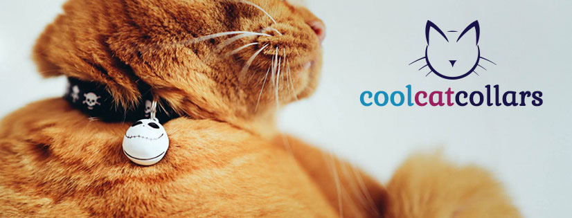 Orders Have Increased by 50% In 18 Months: Cool Cat Collars